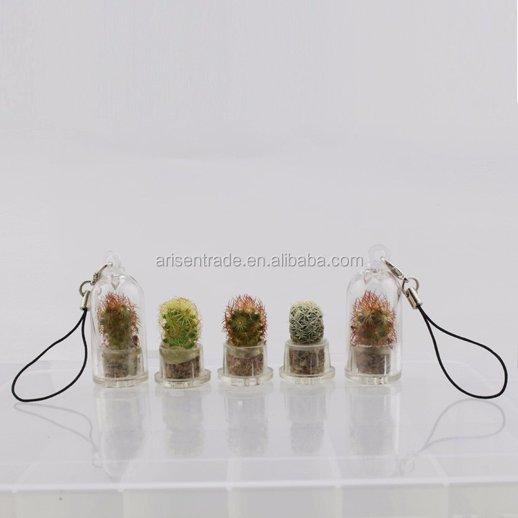 creative mini pet plant cactus keychain