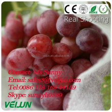 agricultural non-woven fabrica de tela manufacturer in China for agriculture for plant fruit cover UV added