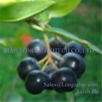 High Quality Natural Black Chokeberry Extract Powder Black Chokeberry Extract