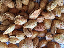 Good Taste Snack Roasted almond With Shell for Sales