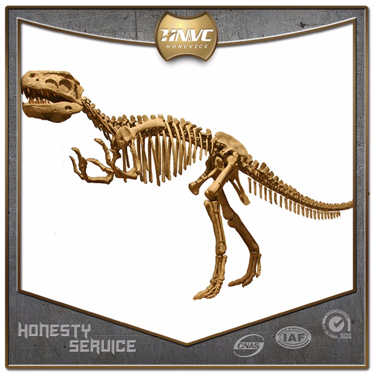 China factory custom artificial life size dinosaur fossil skeleton