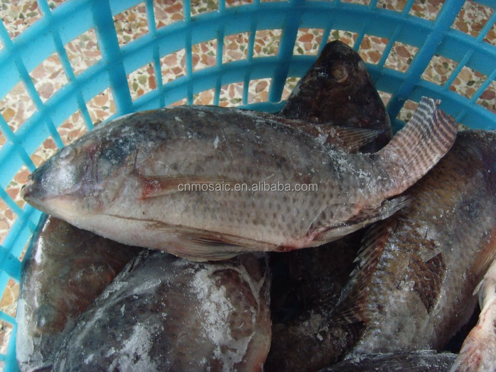 China Grade A Frozen Gutted tilapia fish Fresh hot sales