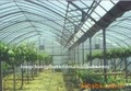 greenhouse PE plastic waterproofing film