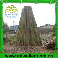2014 Newell raw bamboo poles With Best Price
