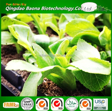 China supplier natural Sweetener Organic Stevia for food & beverage