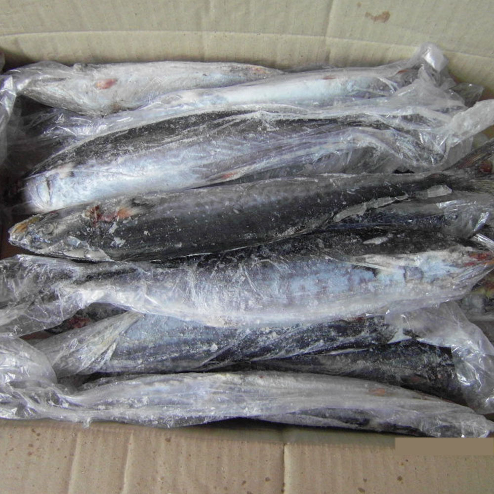 Fresh frozen Spanish mackerel size 500-750g I.Q.F.