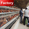 Direct factory competitive price live chicken cages for wholesales