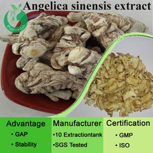 Chinese angelica sinensis root extract dong quai extract