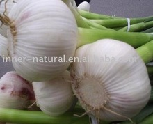 Garlic Extract (100:1) (Odorless) allicin scordinin alliin