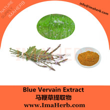 GMP Manufacture GMO Free natural blue vervain extract in stock