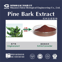 Natural extract powder Pine Bark Extract 95% OPC