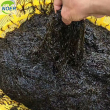 Chinese Food Ingredient Wholesale Roasted Seaweed Strip