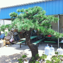 Landscape Fake Tree 3m Artificial Pine Tree with Wooden Branches Fiberglass Trunk for Park Scenery