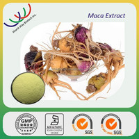Free sample maca extract 0.6% macamides&macaenes,Natural enhance sex ability herb medicine ingredient Maca Extract