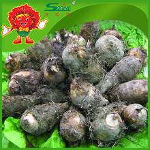 Good quality fresh taro, factory direct supply with reasonable price