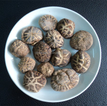 Dried Mushroom for hot sale and with free sample for you