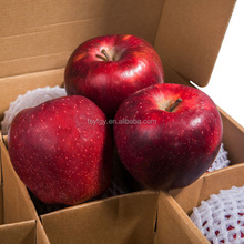 Fruit Apple Red Delicious Apple Wholesale with Best Price