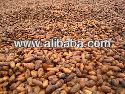 roasted cocoa beans seeds