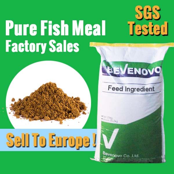 Fish meal factory for 65 protein feed grade buy fish for Protein in fish