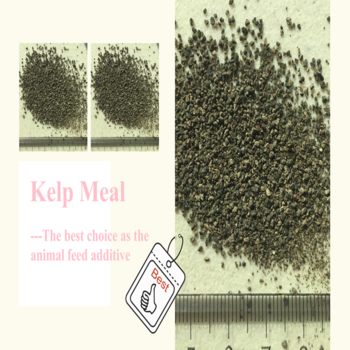 Feed Grade Kelp Meal