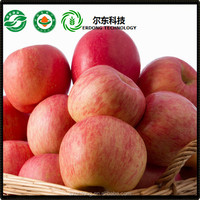 Shanxi Hot Sale Fresh Delicious Apple Fruit in Competitive Price