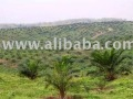 Palm Oil Plantation and Mills for Sale 99,000 hectares areas in JAMBI & RIAU Province Indonesia