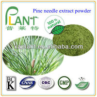Natural Pine needle extract powder