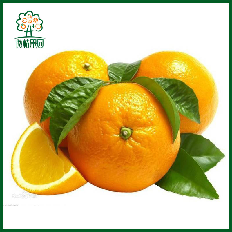 Chinese Fresh fruit for orange juice concentrate