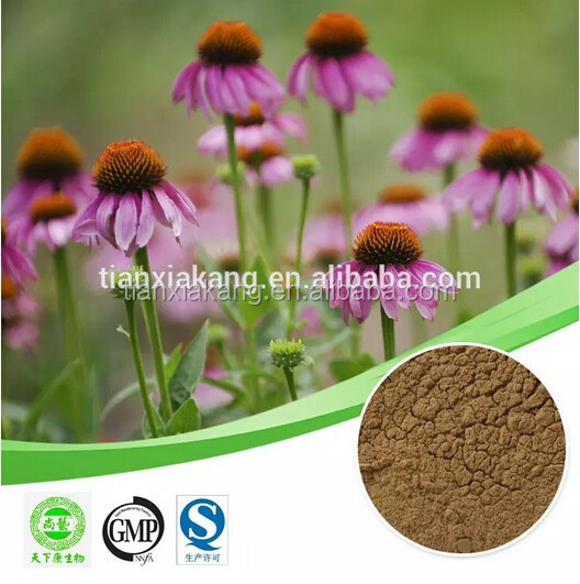 echinacea purpurea plant extract Cichoric acidechinacea extract 4% polyphenol Cichoric acid echinacea extract Cichoric acid