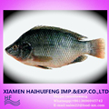 500-800G/PCS BQF Frozen whole black Tilapia Fish Pirce