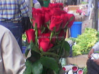 Fresh cut Red Roses for valentines