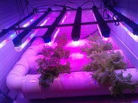 Best seller-3 days delivery led grow tube light,energy saving led tube light