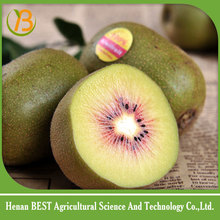 red kiwifruit with wholesale price/qinmei kiwi fruit for sale