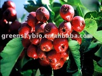 Hawthorn Leaf .Berry Extract