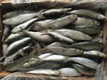 factory hot sales bulk canned sardines Exported to Worldwide