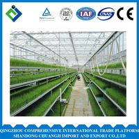 Agriculture Economical Tunnel Green House For