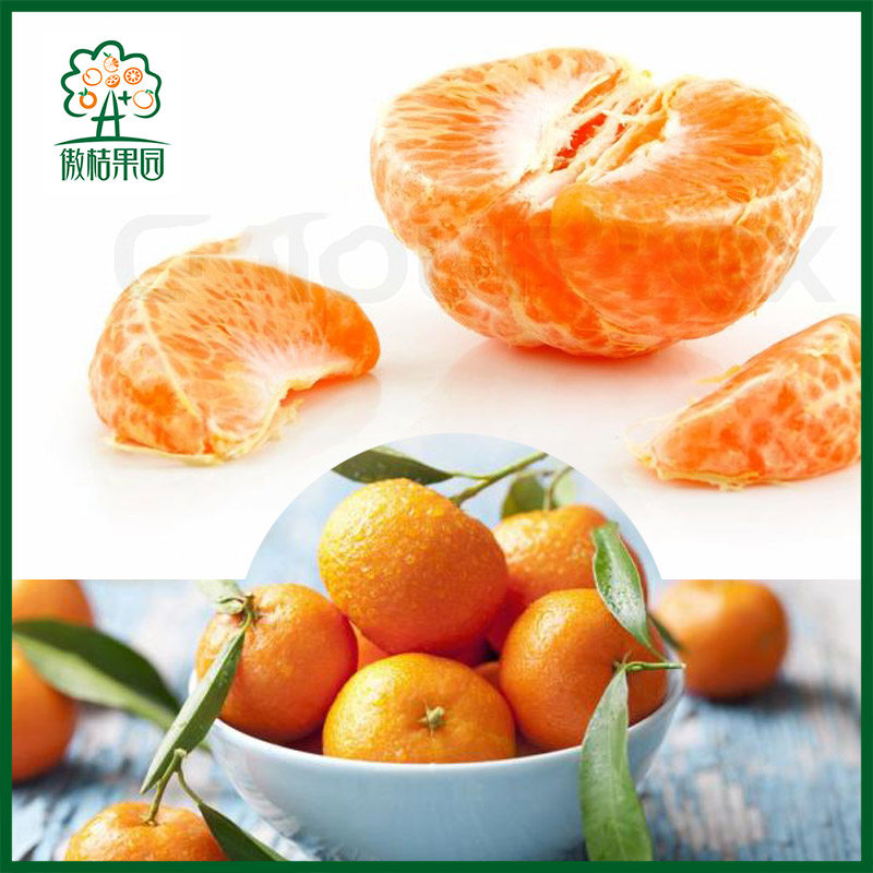 List of yellow fruit baby mandarin price hot orange in China
