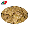 /product-detail/importers-of-ginger-and-garlic-fresh-ginger-and-natural-garlic-ginger-and-garlic-60762349692.html