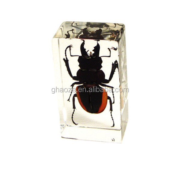 Cheap Acrylic Key Chains Wholesale Resin Insect Factory