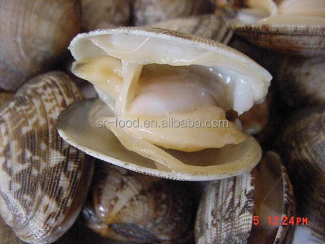 Good Quality Short Necked Clams
