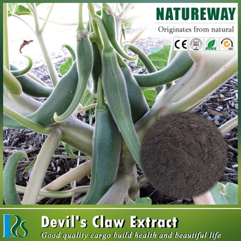 Top quality Devils claw extracted powder