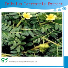 Tribulus Terrestris Extract/Tribulus Terrestris Extract powder Saponins 90%
