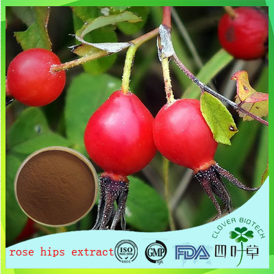 Top quality Natural Rosehip extract, Rosehip extract powder, Rose hip P.E. 10% Vitamin C