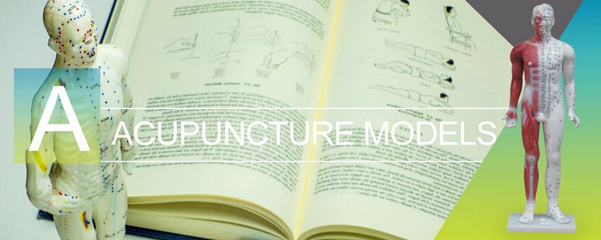 Deluxe acupuncture model 178cm