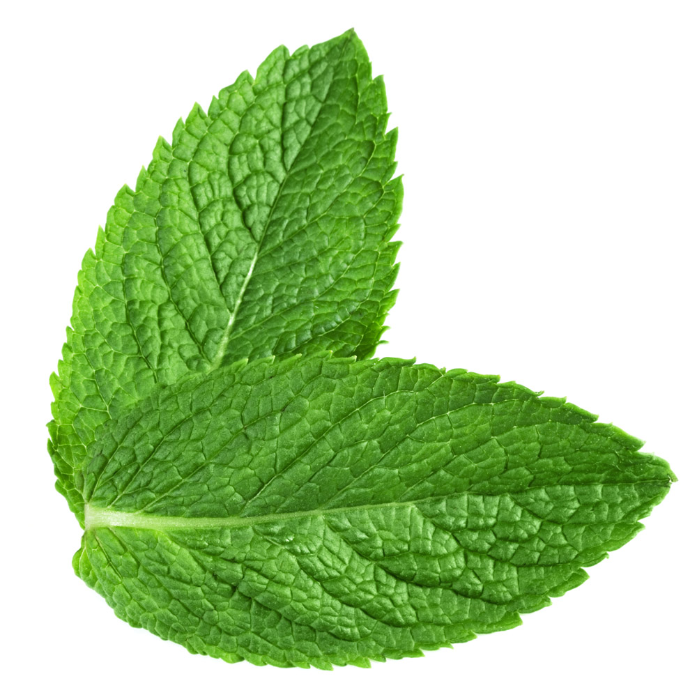 Hight quality and competitive price Mentha Piperita extract, Peppermint Leave extract