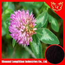 pure red clover extract