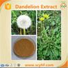 Pure Natural 4:1 Brown Powder Dandelion Extract