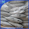 [ frozen SEAFOOD bonito] fish 300-500g new stock Good supplier for 6 years