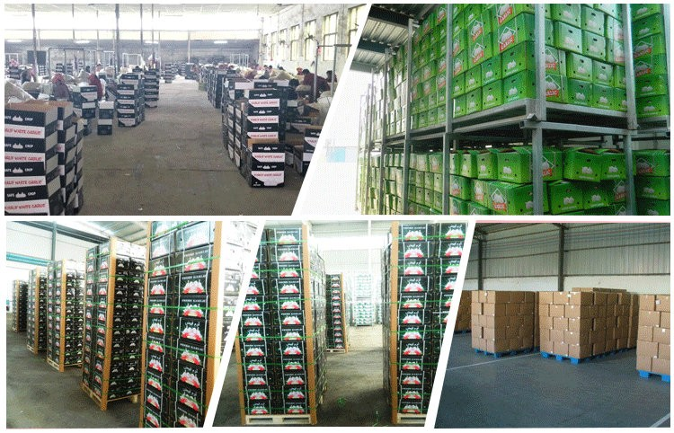 Professional supplier of garlic in brine exporter with competitive price