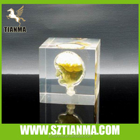 plastic block embedment glass model as promotion gifts